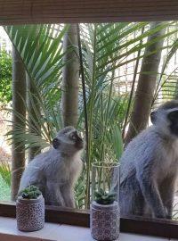 Monkey Screens